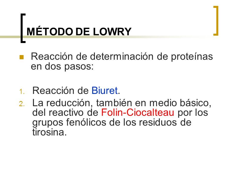 MÉTODO DE LOWRY Reacción de determinación de proteínas en dos pasos: