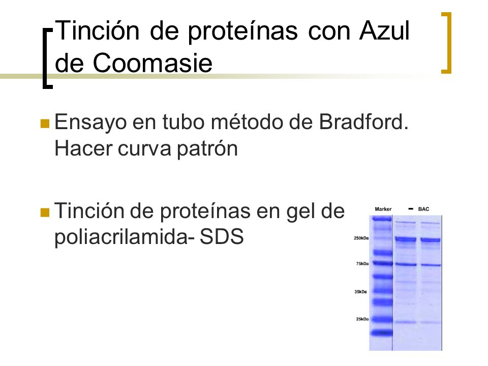 Tinción de proteínas con Azul de Coomasie