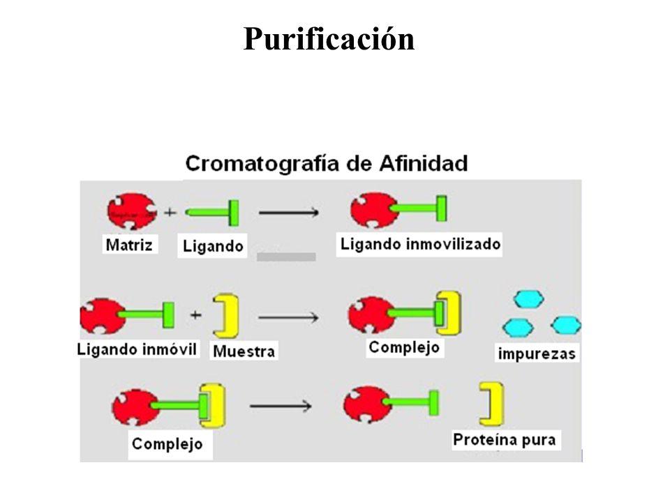 Purificación