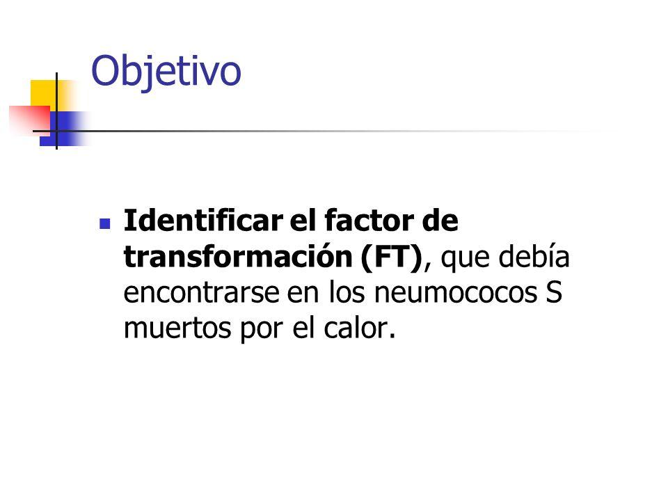 Objetivo Identificar el factor de transformación (FT), que debía encontrarse en los neumococos S muertos por el calor.
