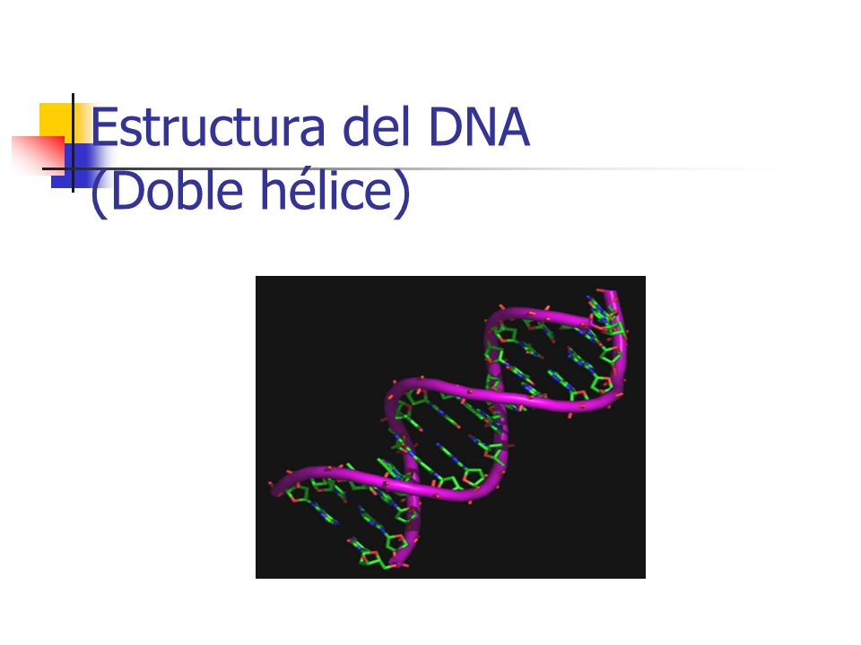 Estructura del DNA (Doble hélice)
