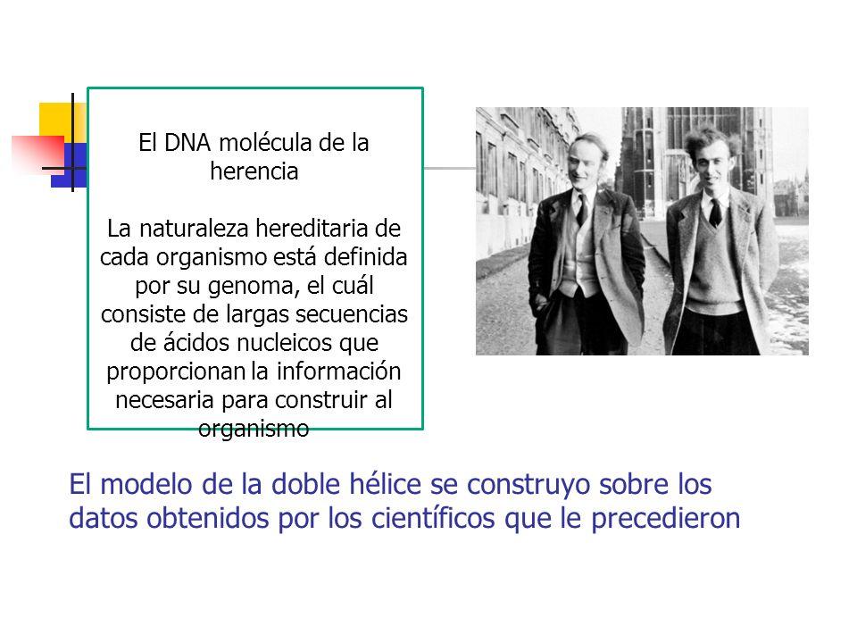 El DNA molécula de la herencia