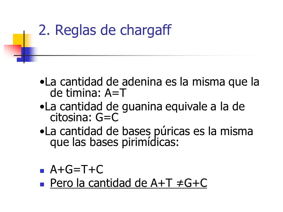 2. Reglas de chargaff •La cantidad de adenina es la misma que la de timina: A=T. •La cantidad de guanina equivale a la de citosina: G=C.