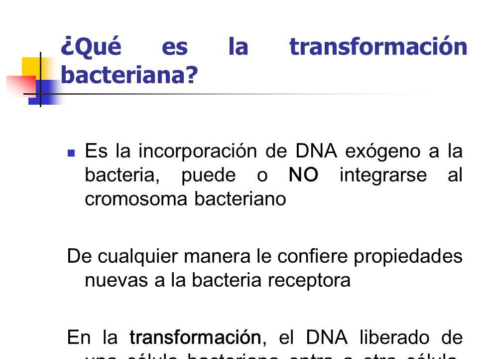 ¿Qué es la transformación bacteriana