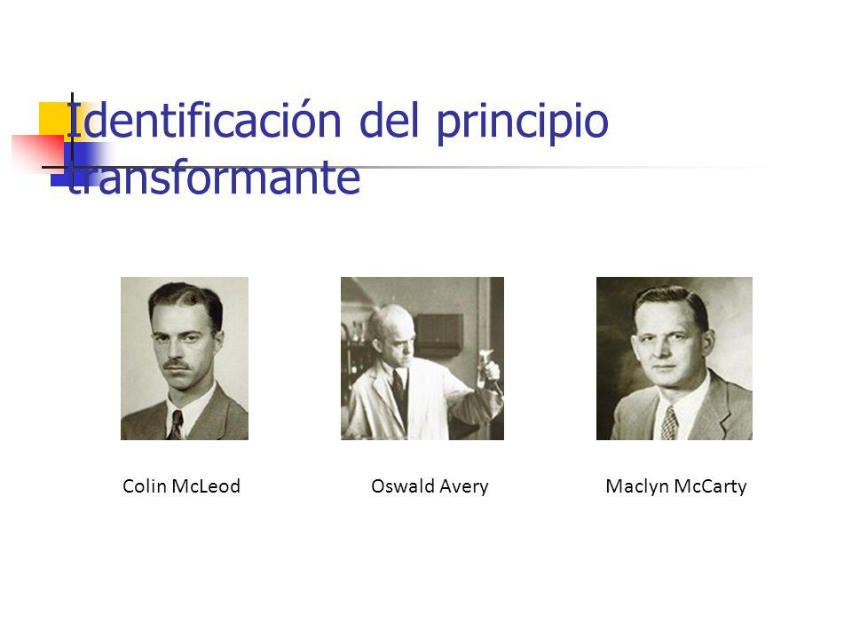 Identificación del principio transformante