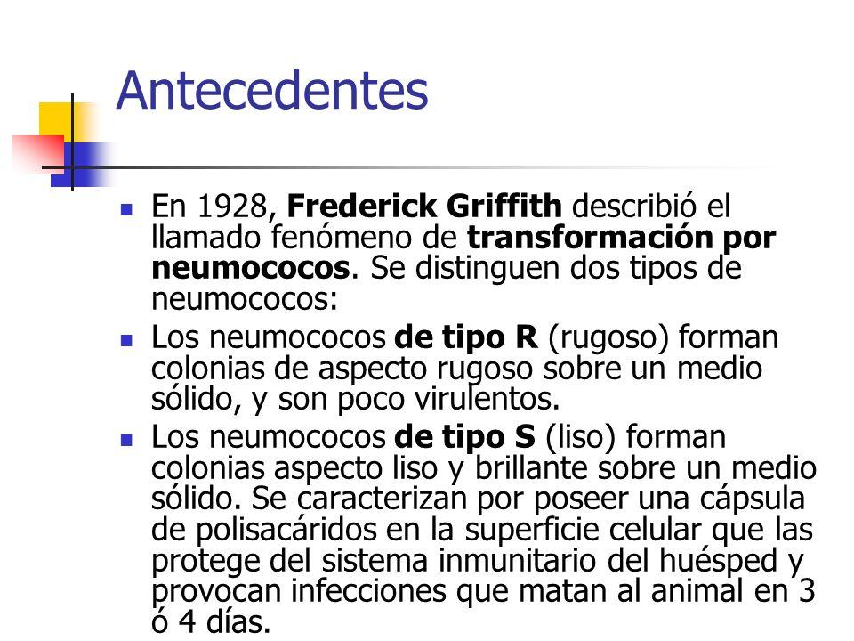 Antecedentes En 1928, Frederick Griffith describió el llamado fenómeno de transformación por neumococos. Se distinguen dos tipos de neumococos: