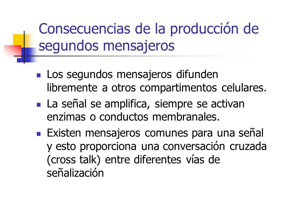 Consecuencias de la producción de segundos mensajeros
