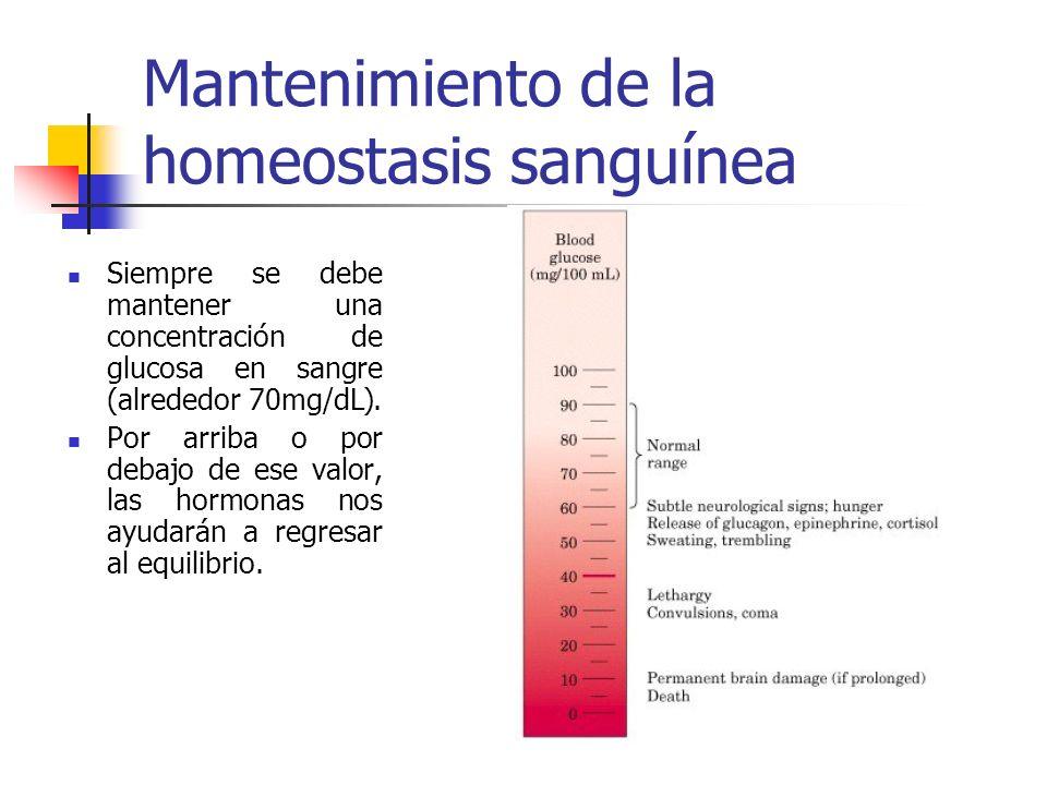 Mantenimiento de la homeostasis sanguínea