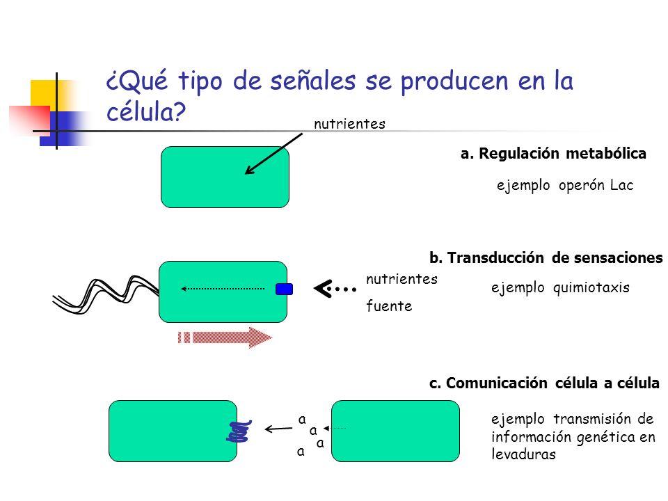 ¿Qué tipo de señales se producen en la célula