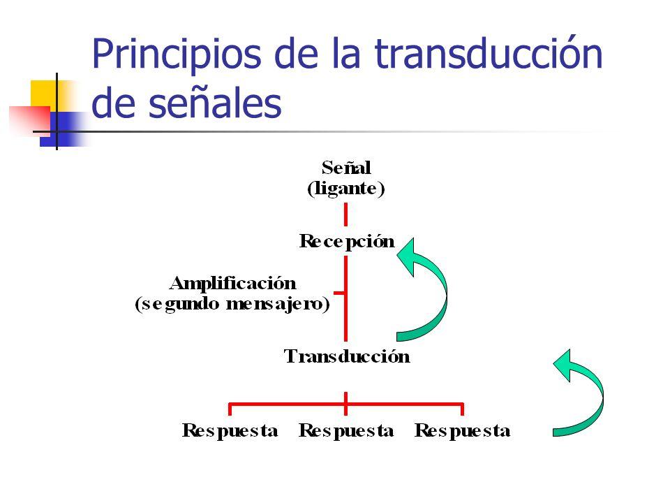 Principios de la transducción de señales