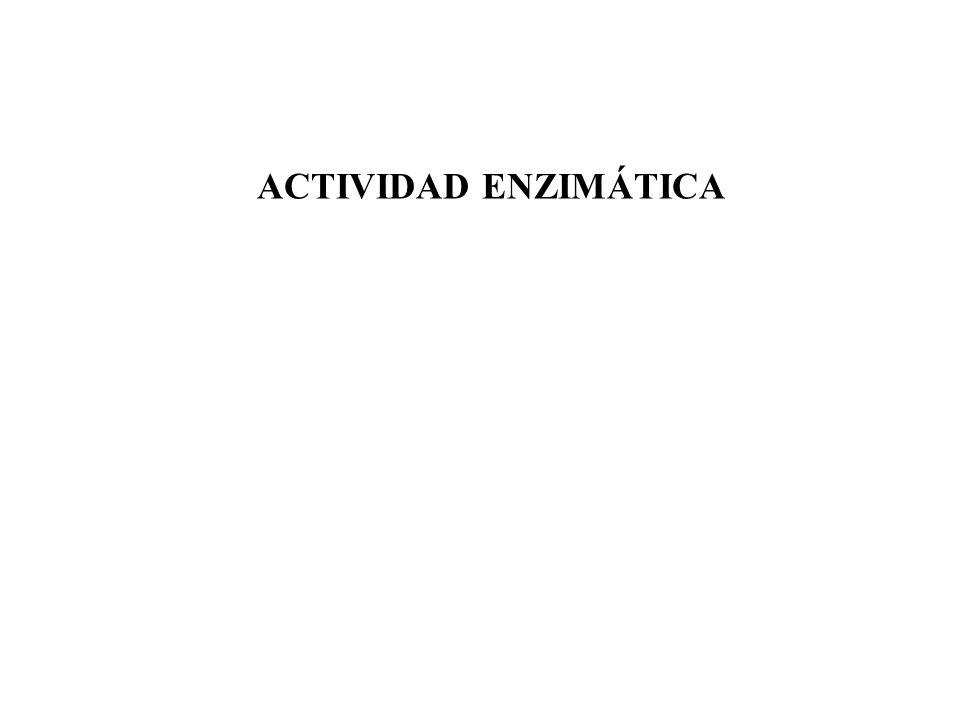ACTIVIDAD ENZIMÁTICA
