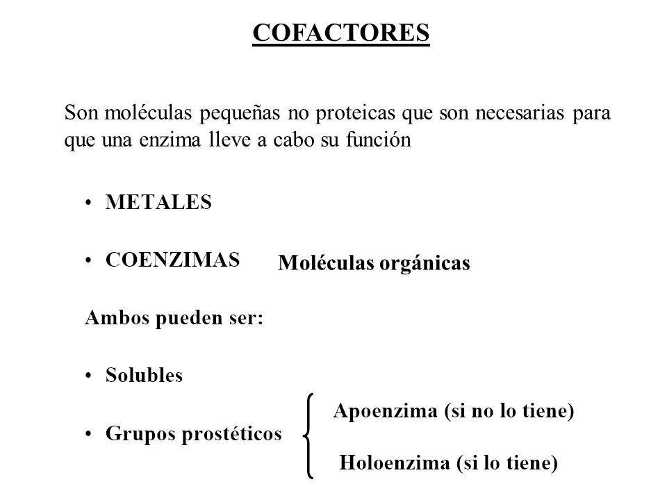 COFACTORES Son moléculas pequeñas no proteicas que son necesarias para que una enzima lleve a cabo su función.