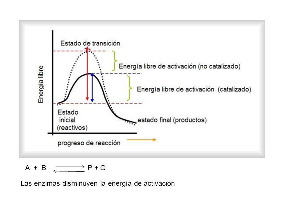 A + B P + Q Las enzimas disminuyen la energía de activación