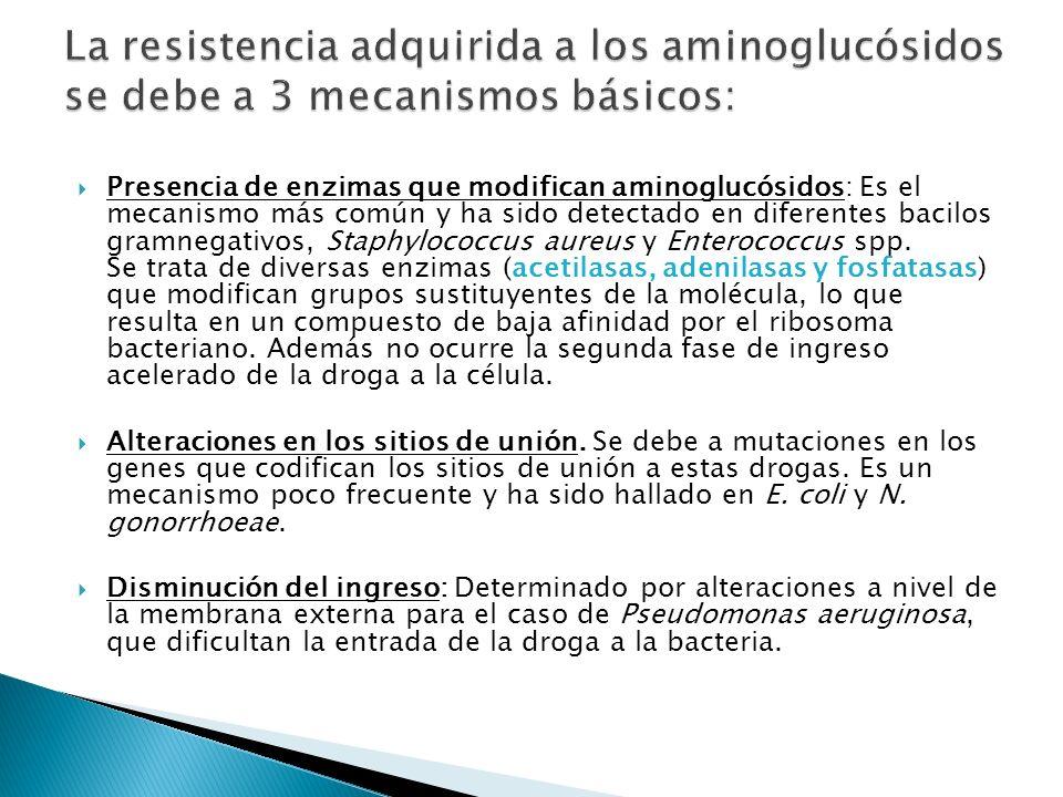 La resistencia adquirida a los aminoglucósidos se debe a 3 mecanismos básicos: