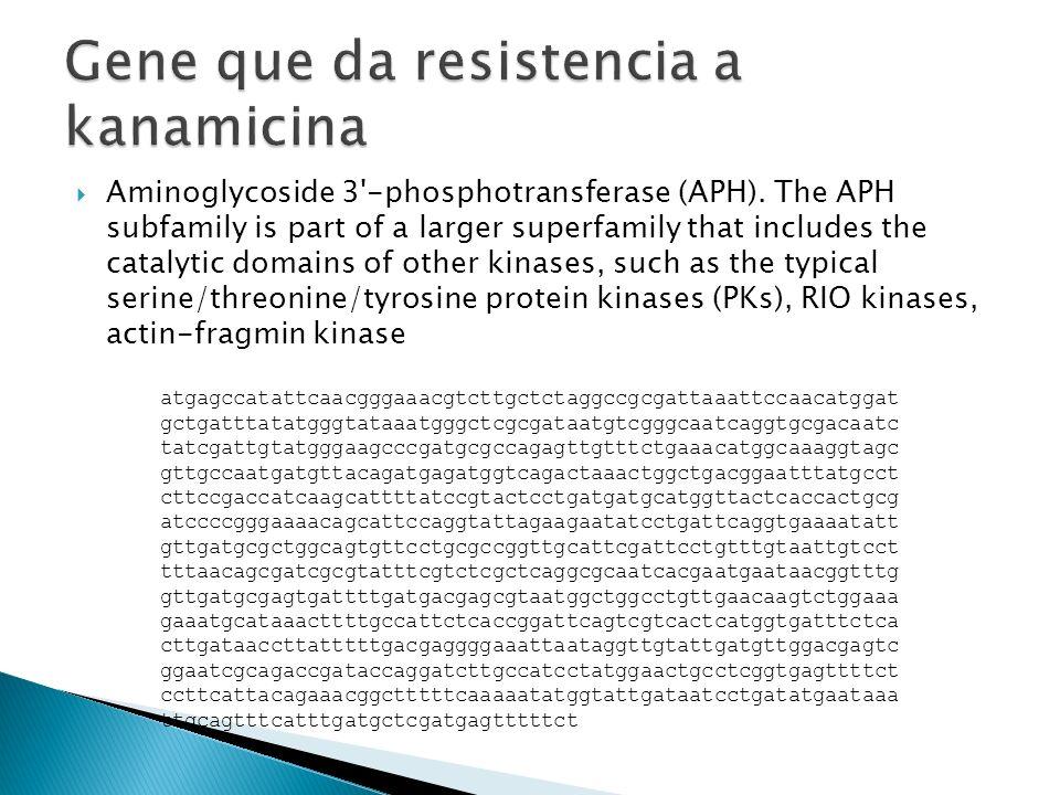 Gene que da resistencia a kanamicina