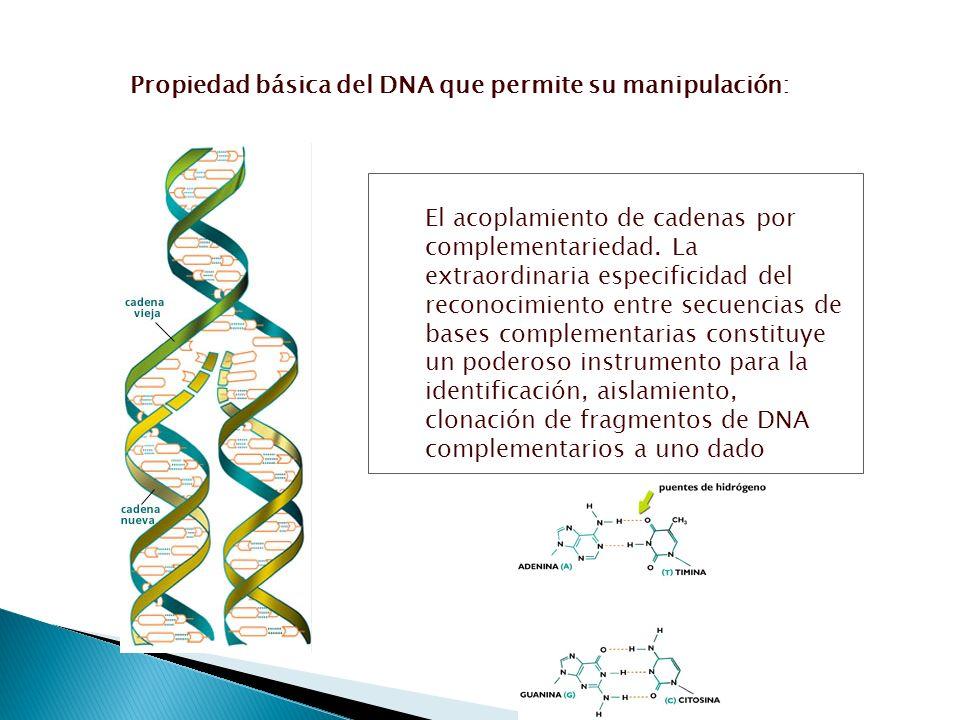Propiedad básica del DNA que permite su manipulación: