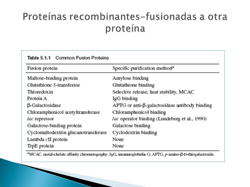 Proteínas recombinantes-fusionadas a otra proteína