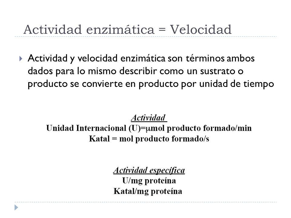 Actividad enzimática = Velocidad