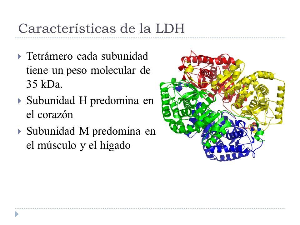 Características de la LDH