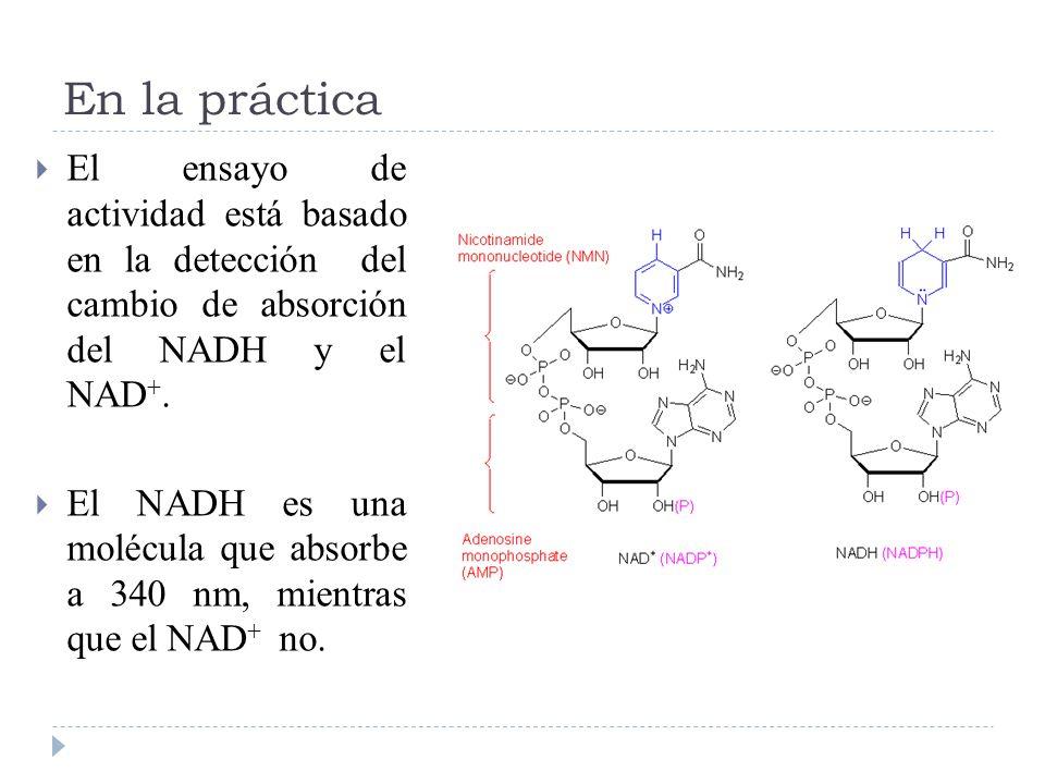 En la prácticaEl ensayo de actividad está basado en la detección del cambio de absorción del NADH y el NAD+.