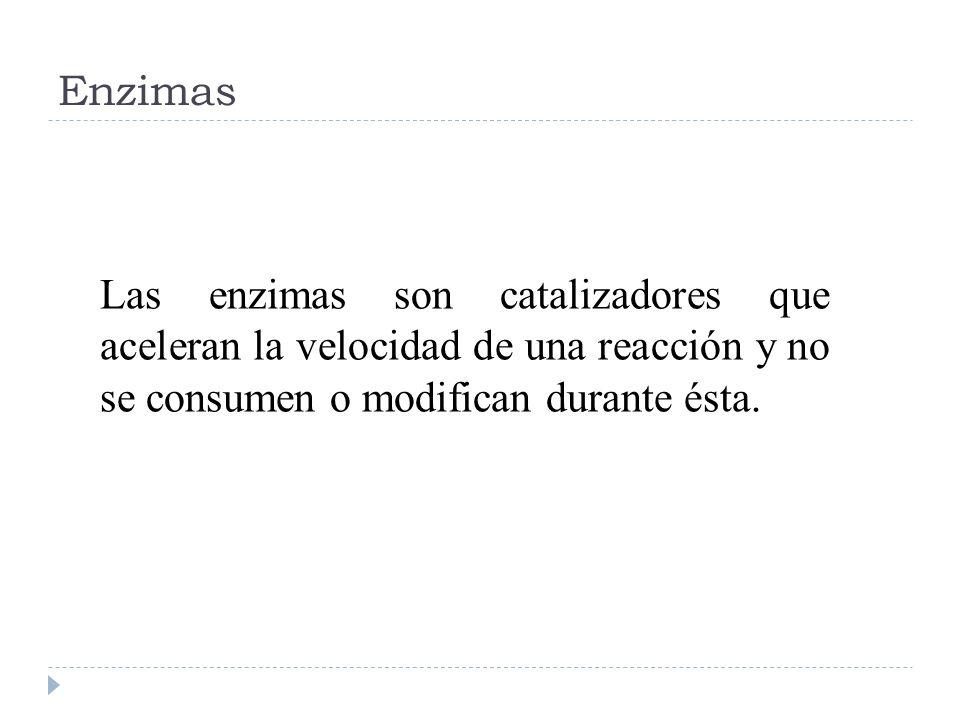 EnzimasLas enzimas son catalizadores que aceleran la velocidad de una reacción y no se consumen o modifican durante ésta.