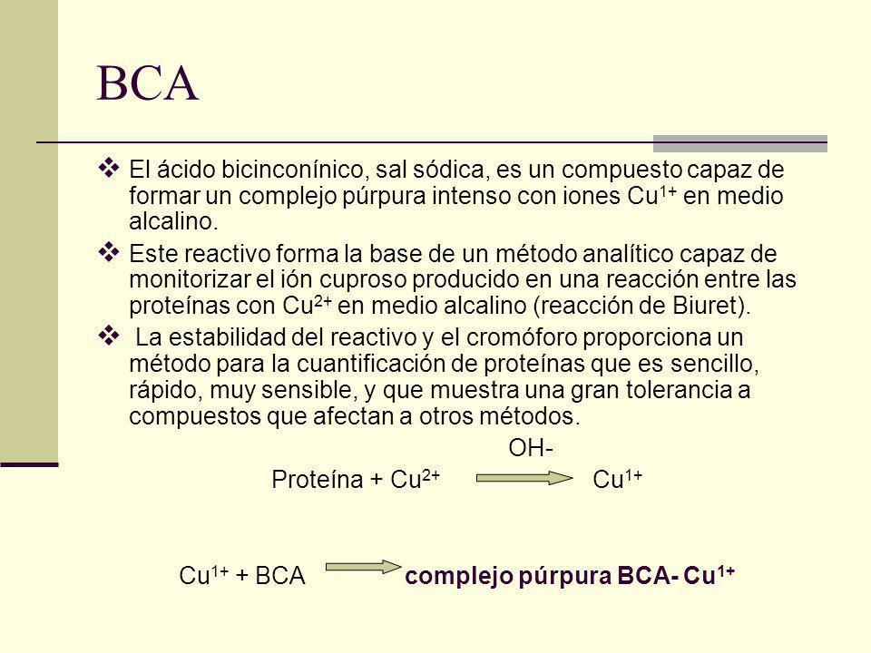 Cu1+ + BCA complejo púrpura BCA- Cu1+