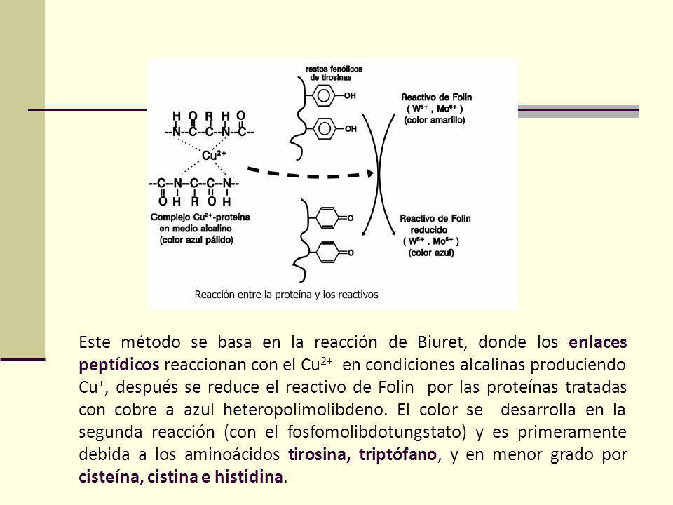 Este método se basa en la reacción de Biuret, donde los enlaces peptídicos reaccionan con el Cu2+ en condiciones alcalinas produciendo Cu+, después se reduce el reactivo de Folin por las proteínas tratadas con cobre a azul heteropolimolibdeno.