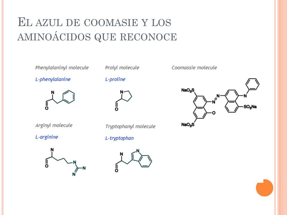 El azul de coomasie y los aminoácidos que reconoce