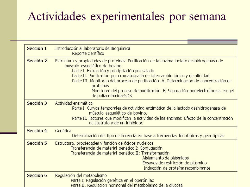 Actividades experimentales por semana