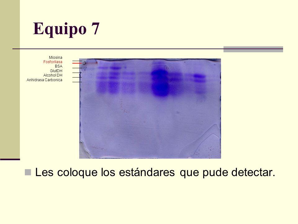Equipo 7 Les coloque los estándares que pude detectar. Miosina