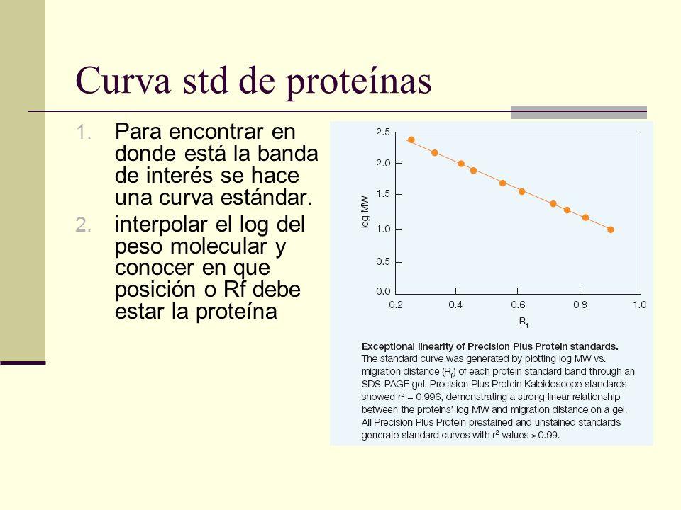 Curva std de proteínas Para encontrar en donde está la banda de interés se hace una curva estándar.