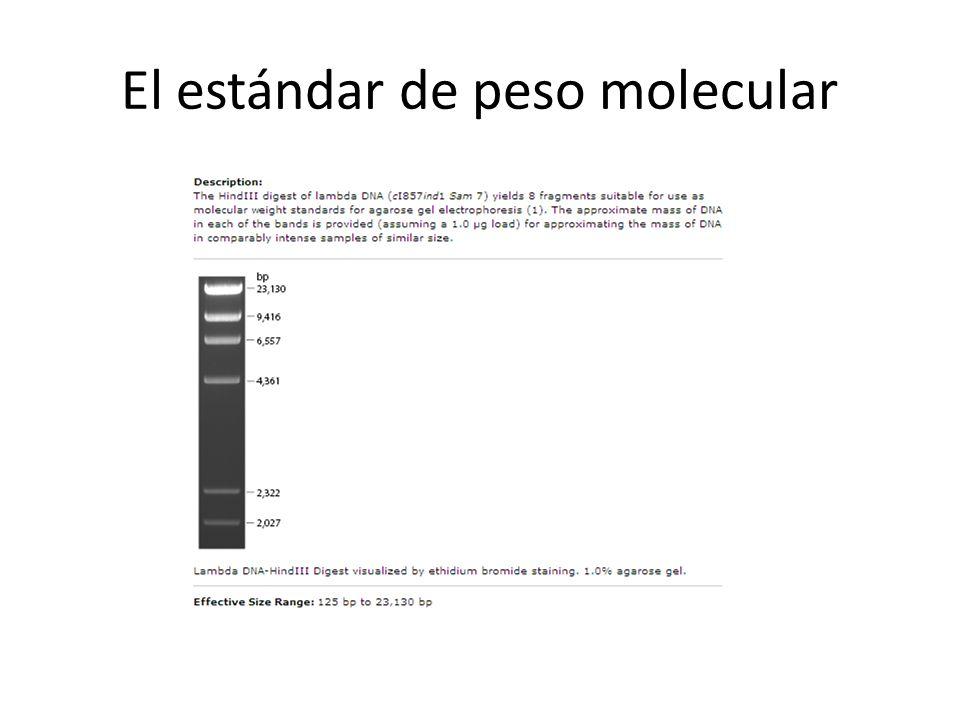 El estándar de peso molecular