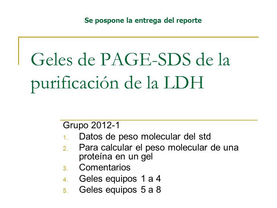 Geles de PAGE-SDS de la purificación de la LDH