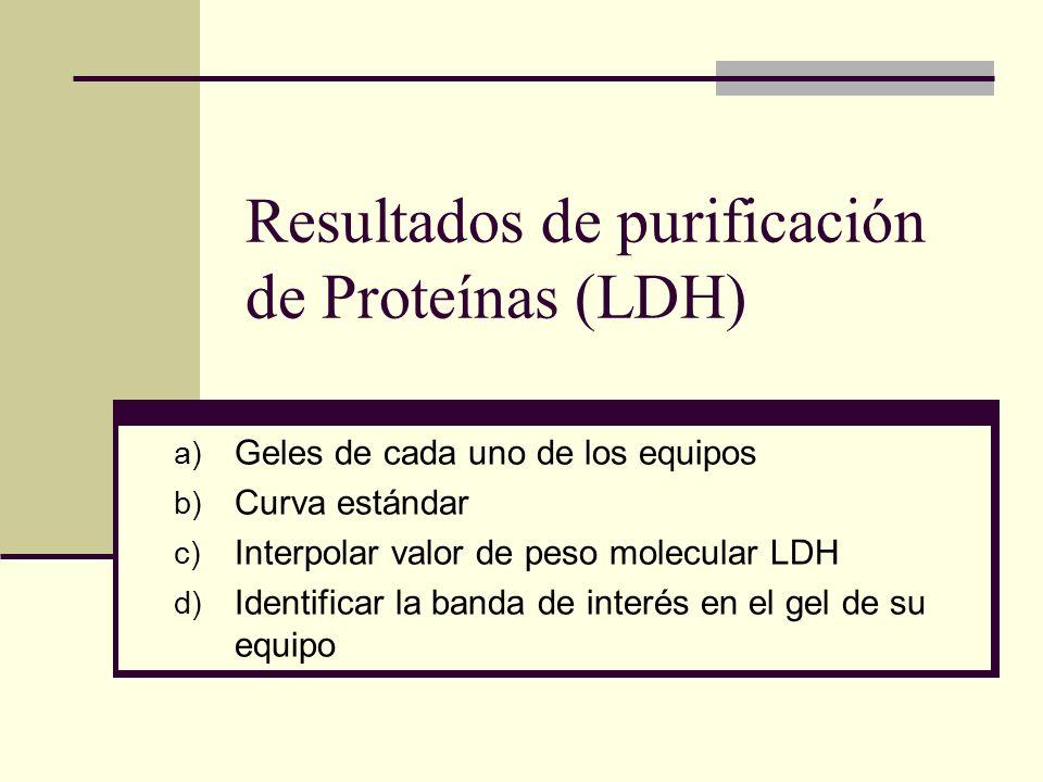 Resultados de purificación de Proteínas (LDH)
