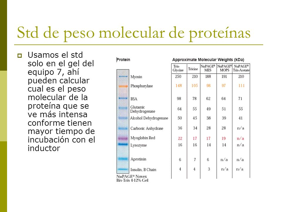 Std de peso molecular de proteínas