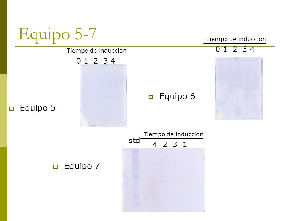 Equipo 5-7 Equipo 6 Equipo 5 Equipo 7 0 1 2 3 4 0 1 2 3 4 std 4 2 3 1
