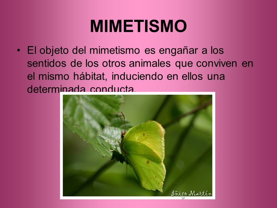MIMETISMO