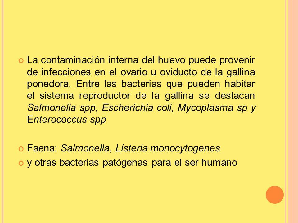 La contaminación interna del huevo puede provenir de infecciones en el ovario u oviducto de la gallina ponedora. Entre las bacterias que pueden habitar el sistema reproductor de la gallina se destacan Salmonella spp, Escherichia coli, Mycoplasma sp y Enterococcus spp