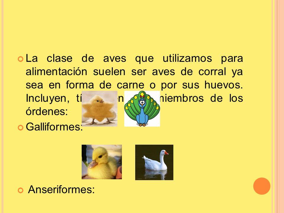 La clase de aves que utilizamos para alimentación suelen ser aves de corral ya sea en forma de carne o por sus huevos. Incluyen, típicamente, a miembros de los órdenes: