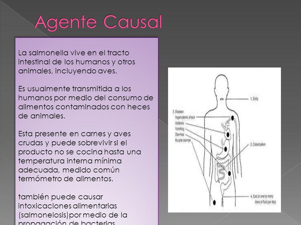 Agente Causal La salmonella vive en el tracto intestinal de los humanos y otros animales, incluyendo aves.