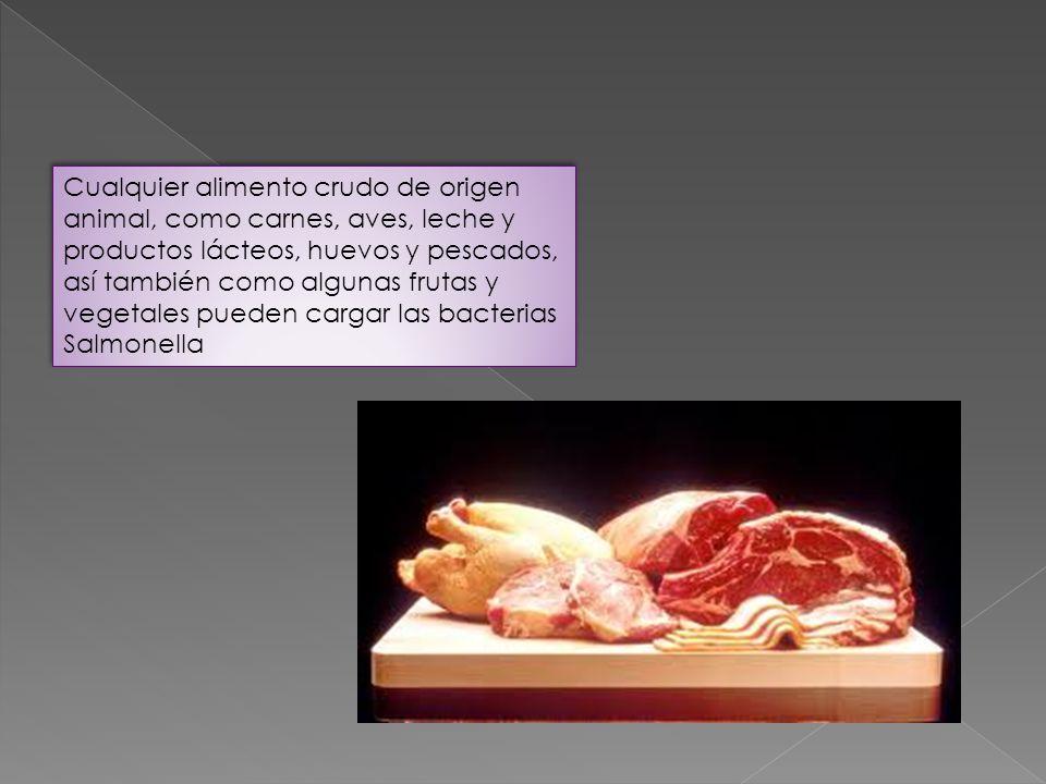 Cualquier alimento crudo de origen animal, como carnes, aves, leche y productos lácteos, huevos y pescados, así también como algunas frutas y vegetales pueden cargar las bacterias
