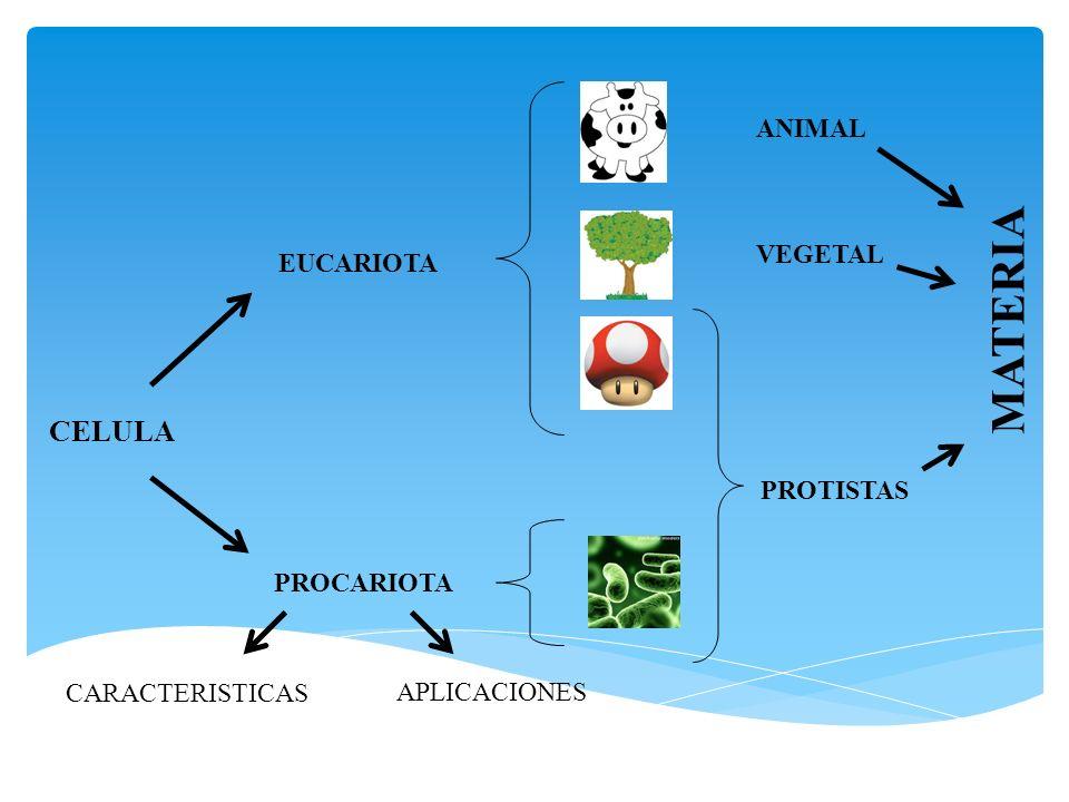 MATERIA CELULA ANIMAL VEGETAL EUCARIOTA PROTISTAS PROCARIOTA