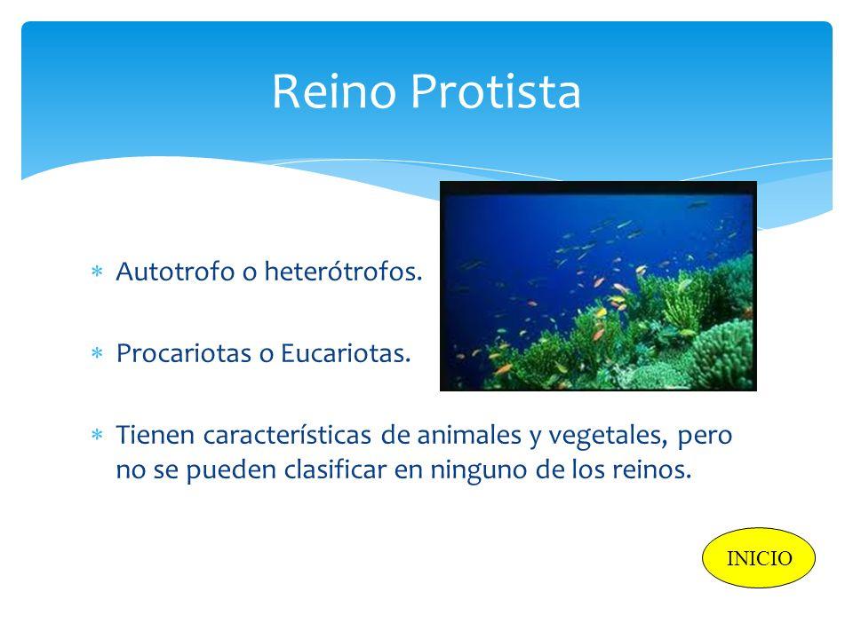 Reino Protista Autotrofo o heterótrofos. Procariotas o Eucariotas.