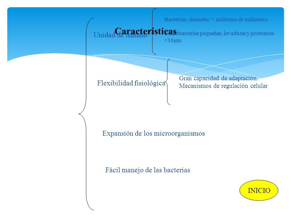Características Unidad de tamaño Flexibilidad fisiológica