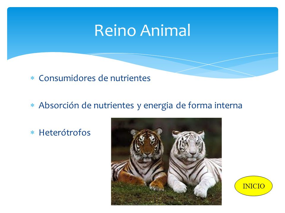 Reino Animal Consumidores de nutrientes
