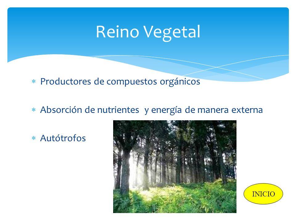 Reino Vegetal Productores de compuestos orgánicos