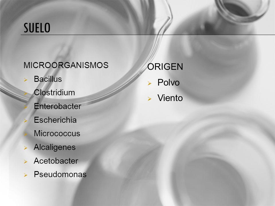 Suelo ORIGEN Polvo Viento MICROORGANISMOS Bacillus Clostridium
