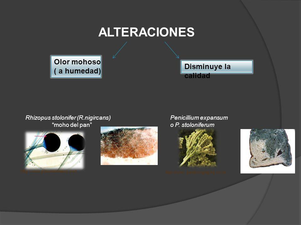 ALTERACIONES Olor mohoso ( a humedad) Disminuye la calidad