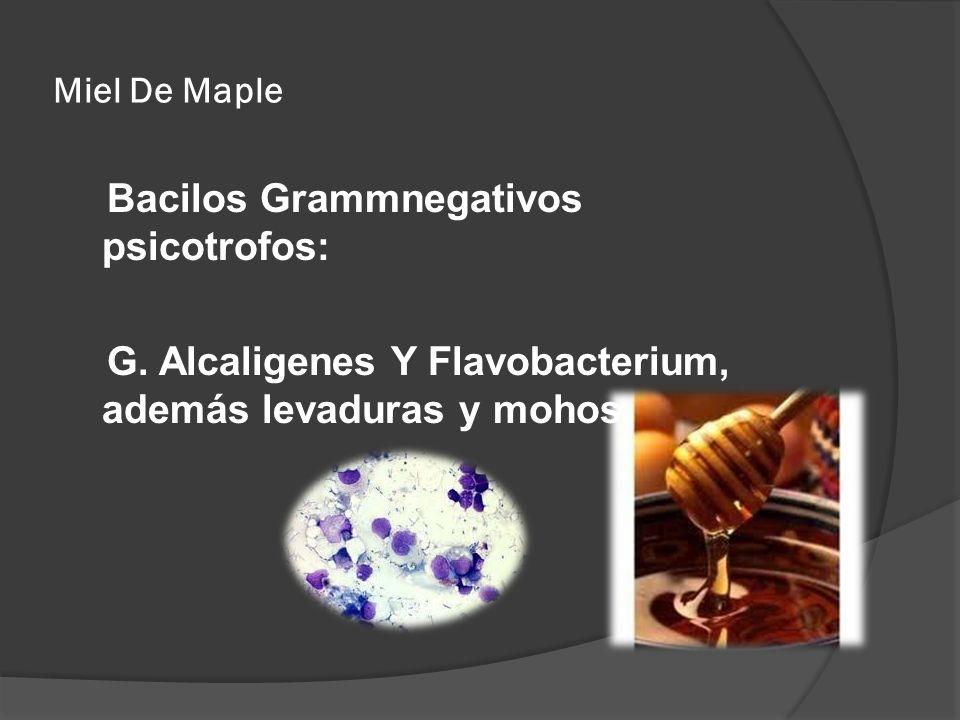 Miel De MapleBacilos Grammnegativos psicotrofos: G.