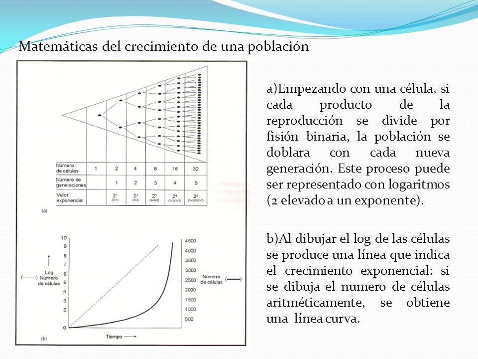 Matemáticas del crecimiento de una población